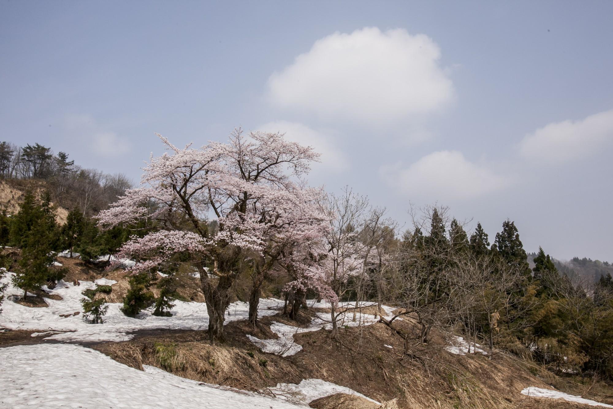 比礼(残雪)2