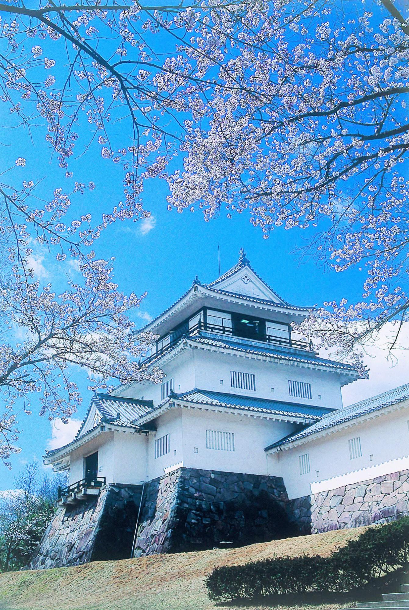 T0205R情-悠久山公園-桜2補正02
