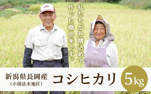 法末棚田米・コシヒカリ5kg